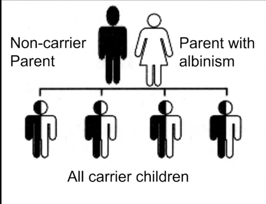 Genetic chart featuring a non-carrier parent and a parent with albinism and their offspring